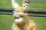 Hartley Hare - Pipkins star!